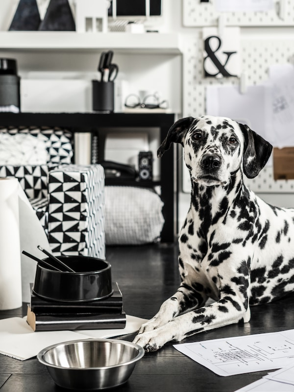 A black and white dog is sitting between black and white items.