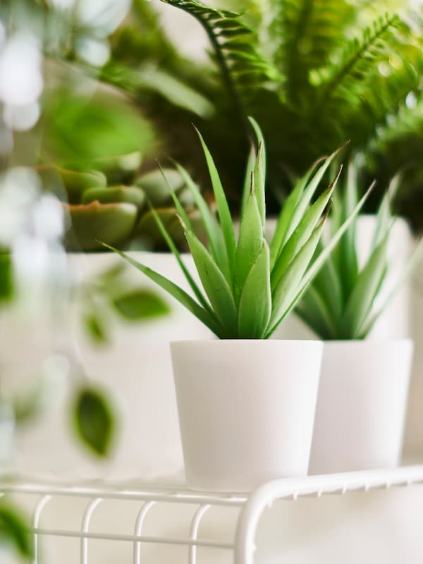 Two FEJKA artificial plants with other FEJKA plants in the background set on a SVENSHULT wall shelf in a bright room.