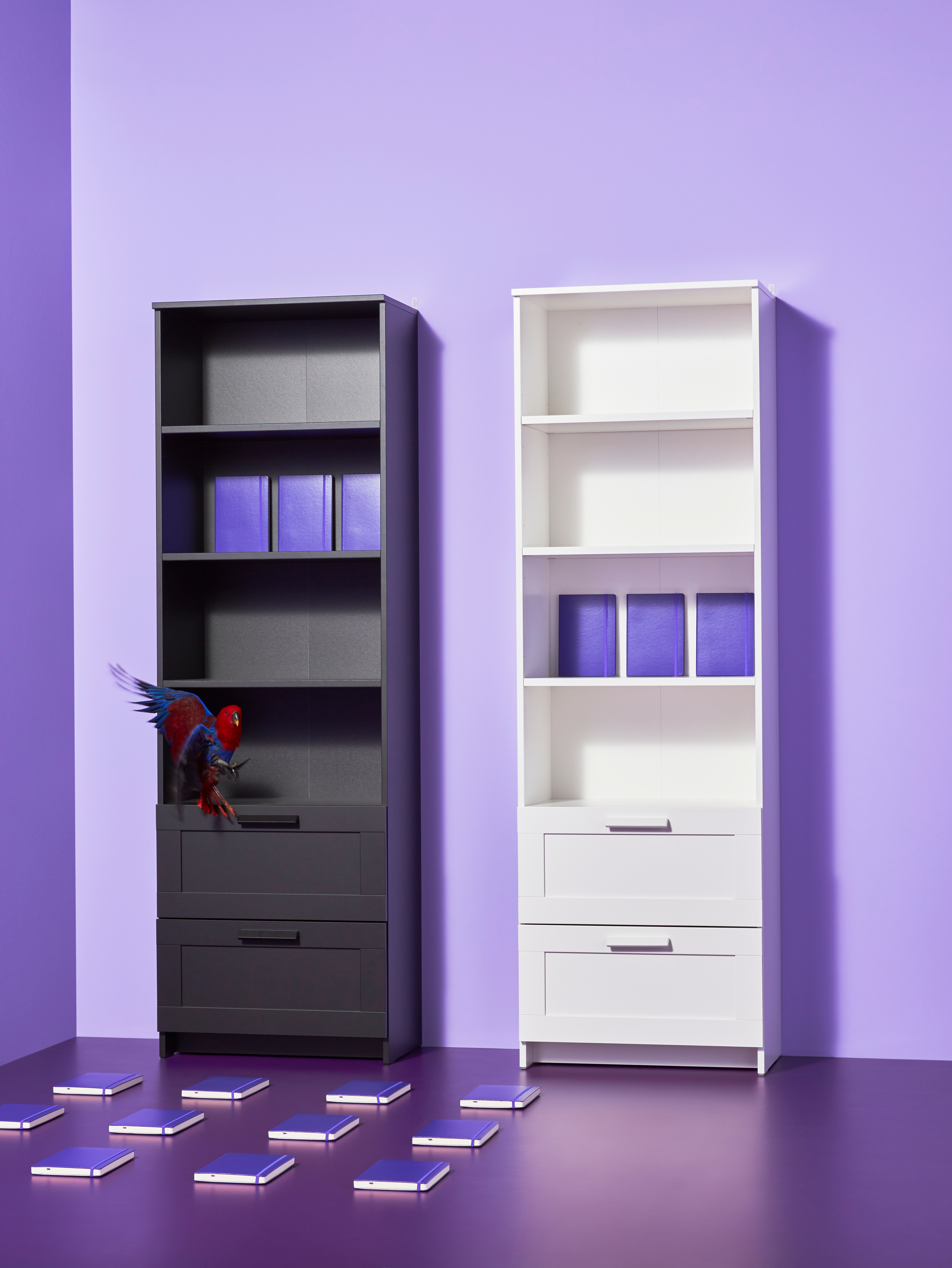 Empty purple room with two tall wooden bookcases in black and white, colourful parrot and notebooks arranged on the floor.