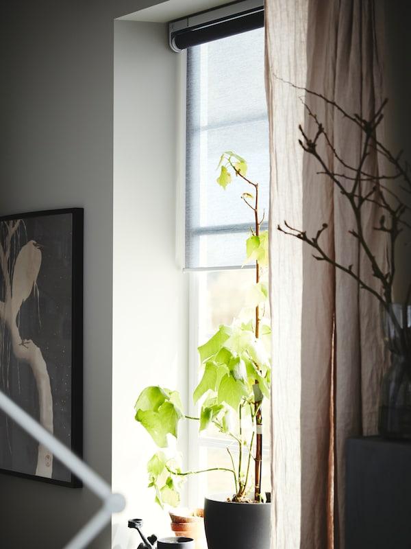 Ikkuna, jossa harmaa rullaverho, beiget verhot ja kasvi tummanharmaassa ruukussa. Kehystetty juliste roikkuu vieressä.