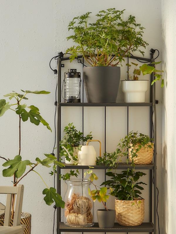 Ein graues Regal, u. a. mit einem CITRONSYRA Übertopf und vielen Grünpflanzen