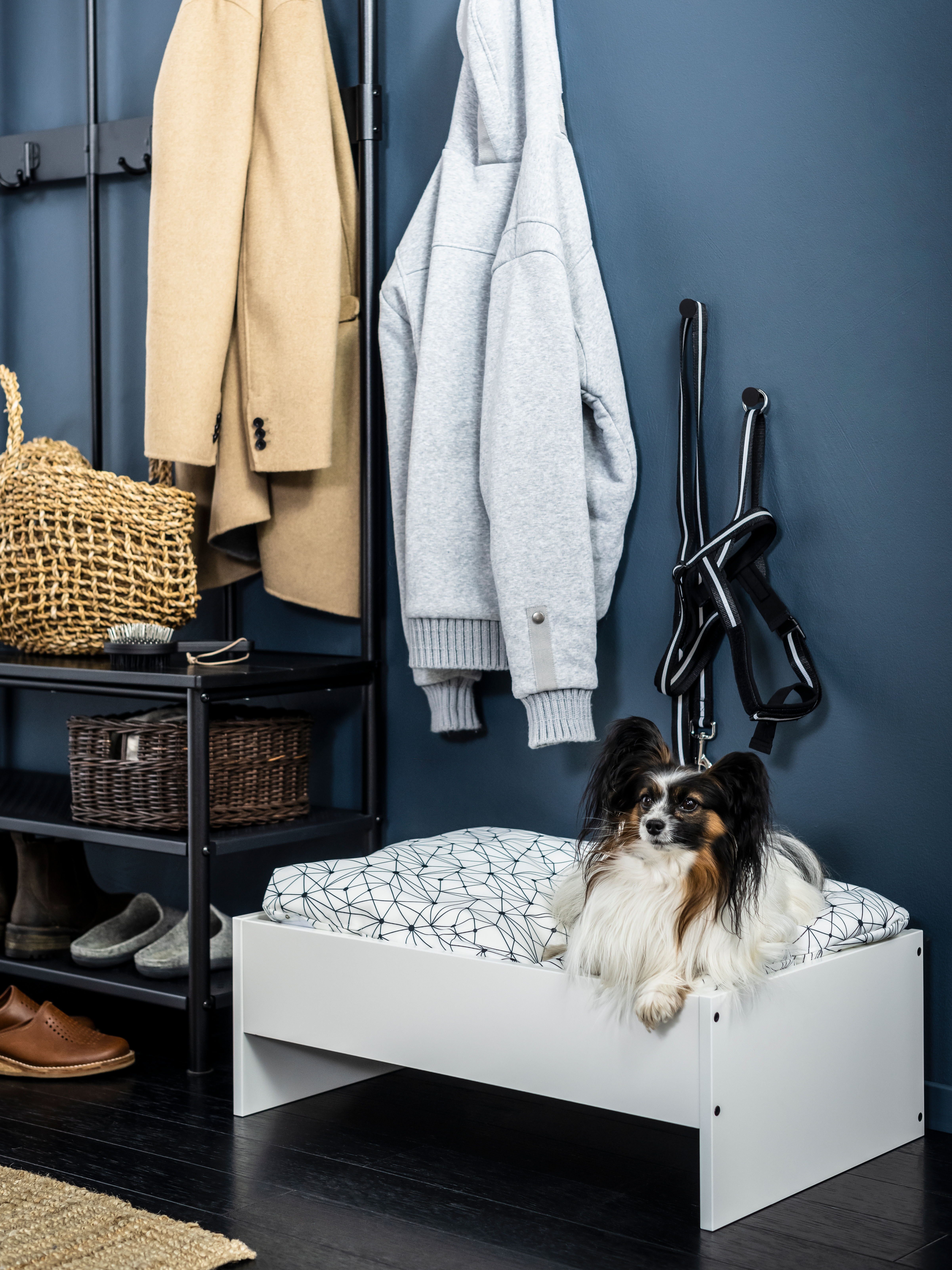 Small dog in LURVIG bed frame with LURVIG cushion. The bed sits in a dark blue hallway near a coat rack.