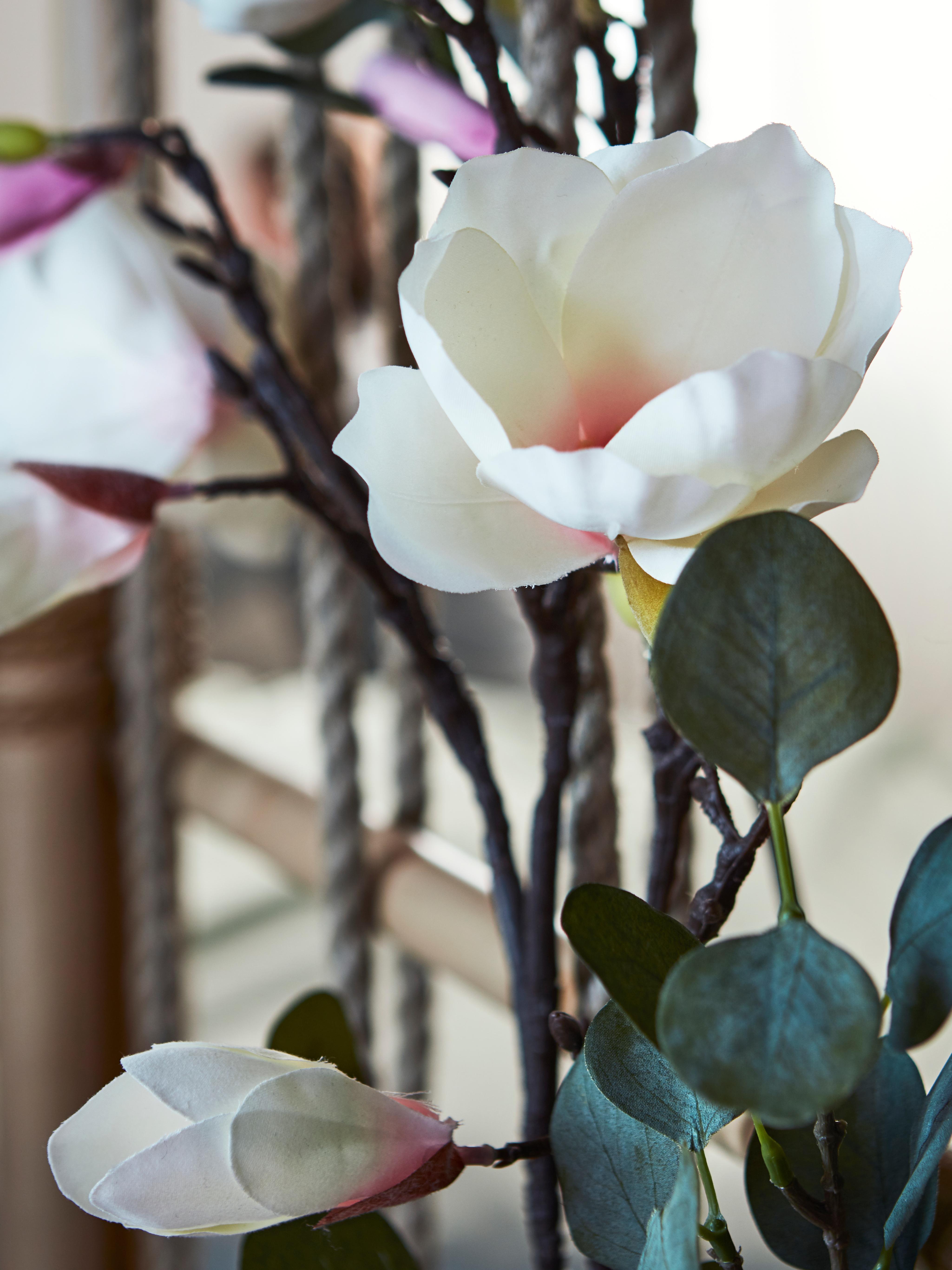 Bijeli SMYCKA magnolija umjetni cvijet s ružičastim rumenilom u sredini, okružen granama i zelenim listovima.