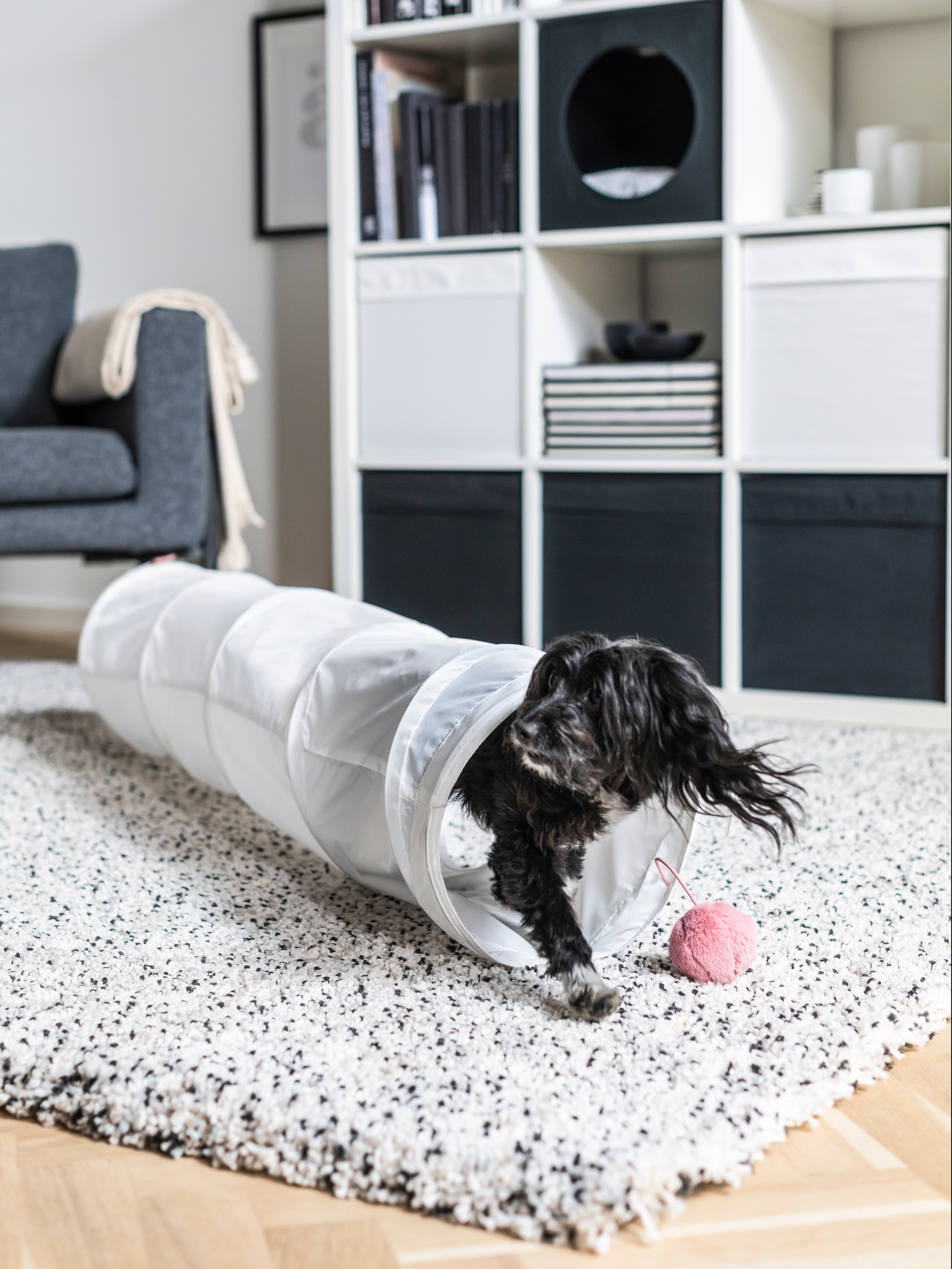 Small dog coming out of a LURVIG play tunnel that's on a white shag rug with black speckles. A pink play toy hangs from the end of the tunnel.