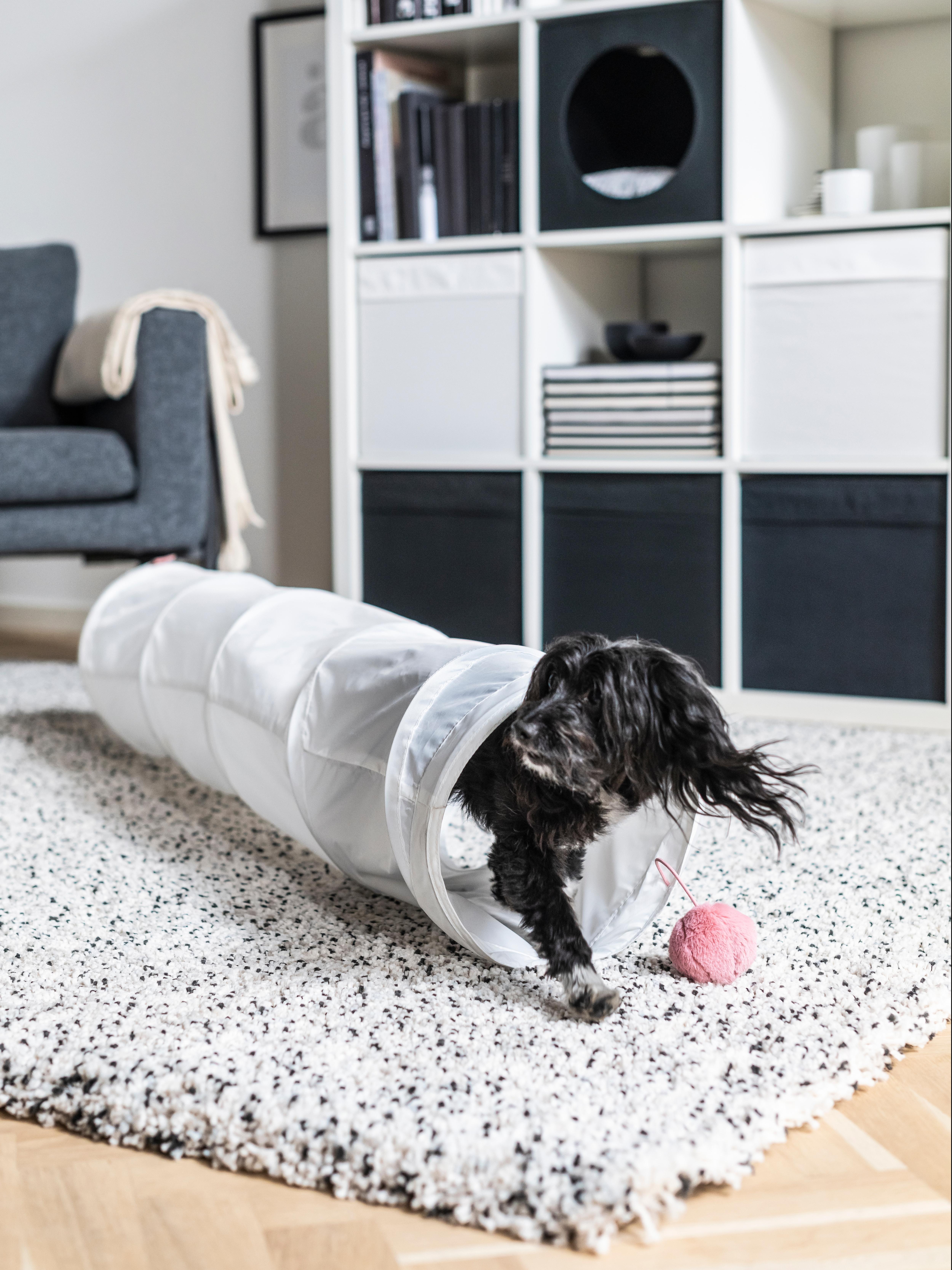 Mali pas izlazi iz LURVIG tunela koji je na bijelom tepihu s crnim točkicama. Roza igračka visi na kraju tunela.