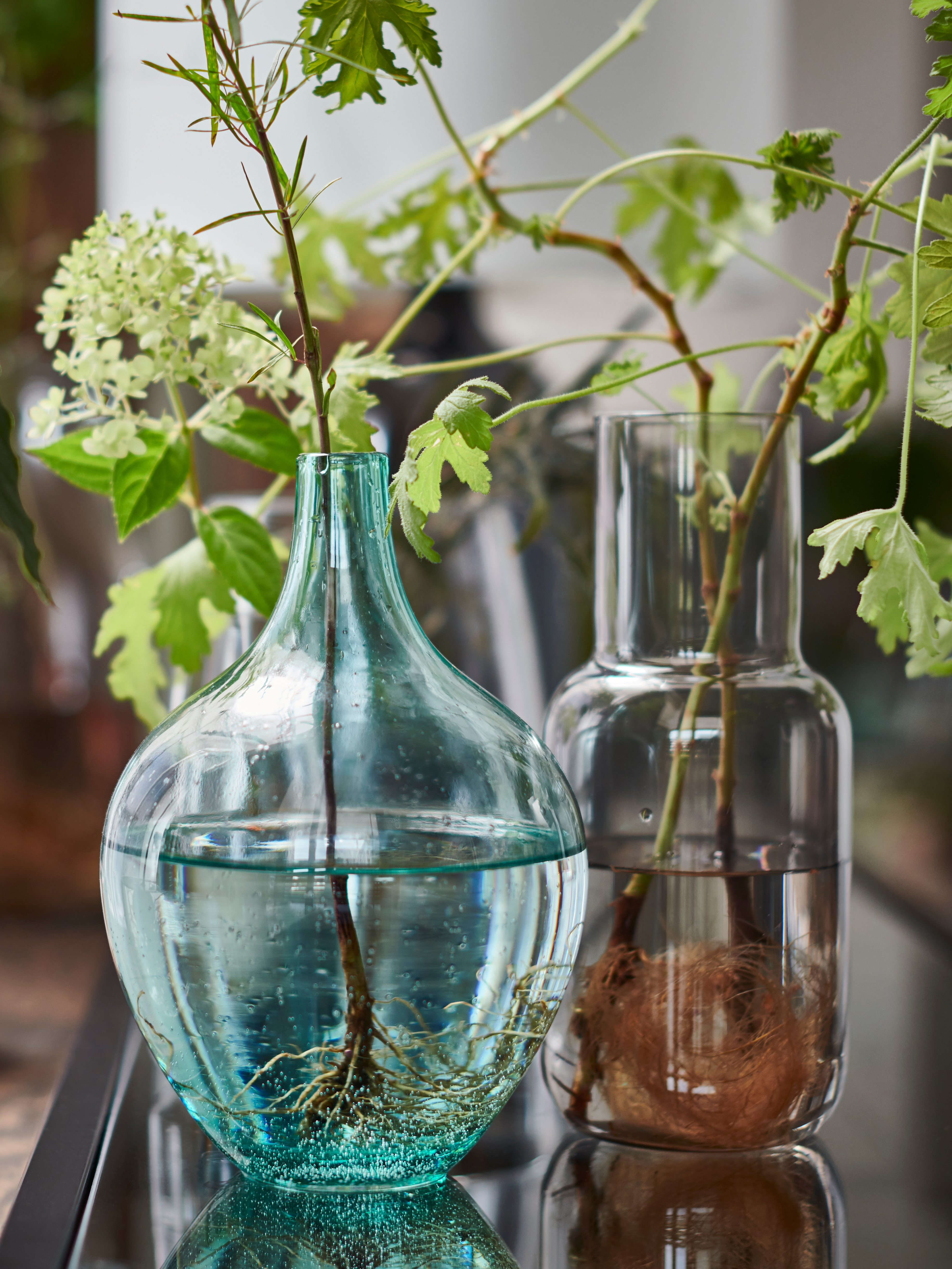 A light turquoise SALONG vase filled with water holding a green leafy plant beside a FÖRENLIG vase on a shiny black worktop.