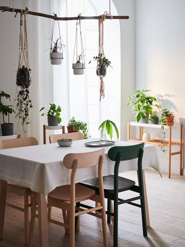 A dining room decorated with green plants, giving a vivid and joyful expression.