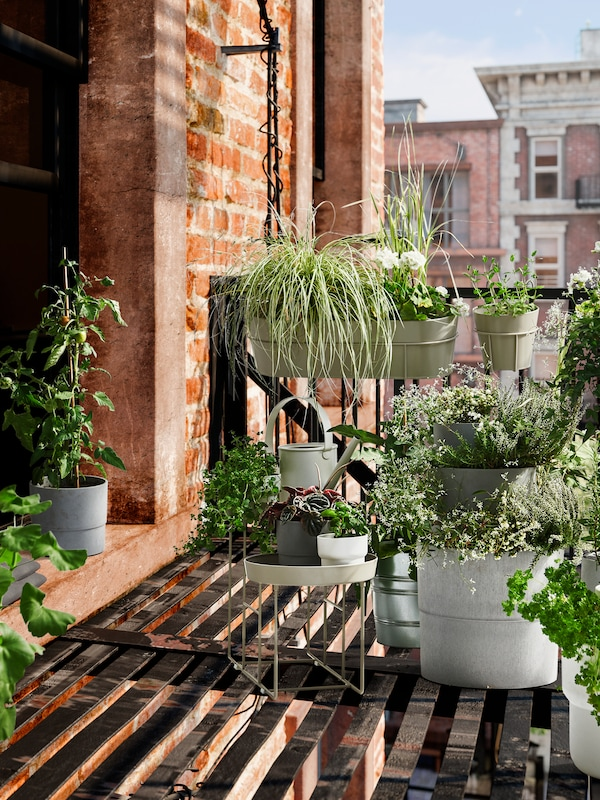 A balcony with different sized flower pots in which green plants grow and a plant shelf with small pots.