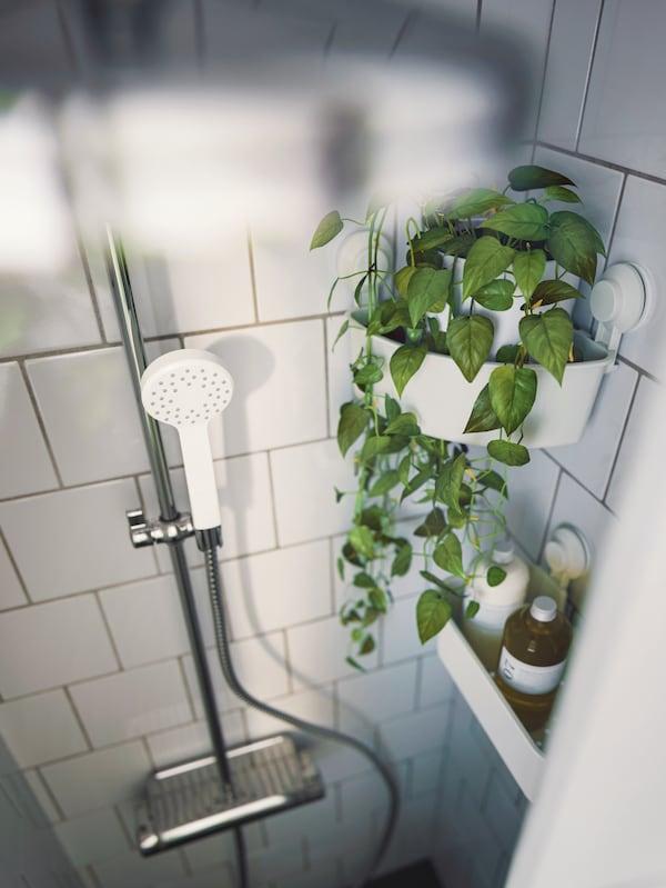 Badeområde med en hvid LILLREVET håndbruser med én funktion og hvide TISKEN kurve med sugekop og toiletsager i.