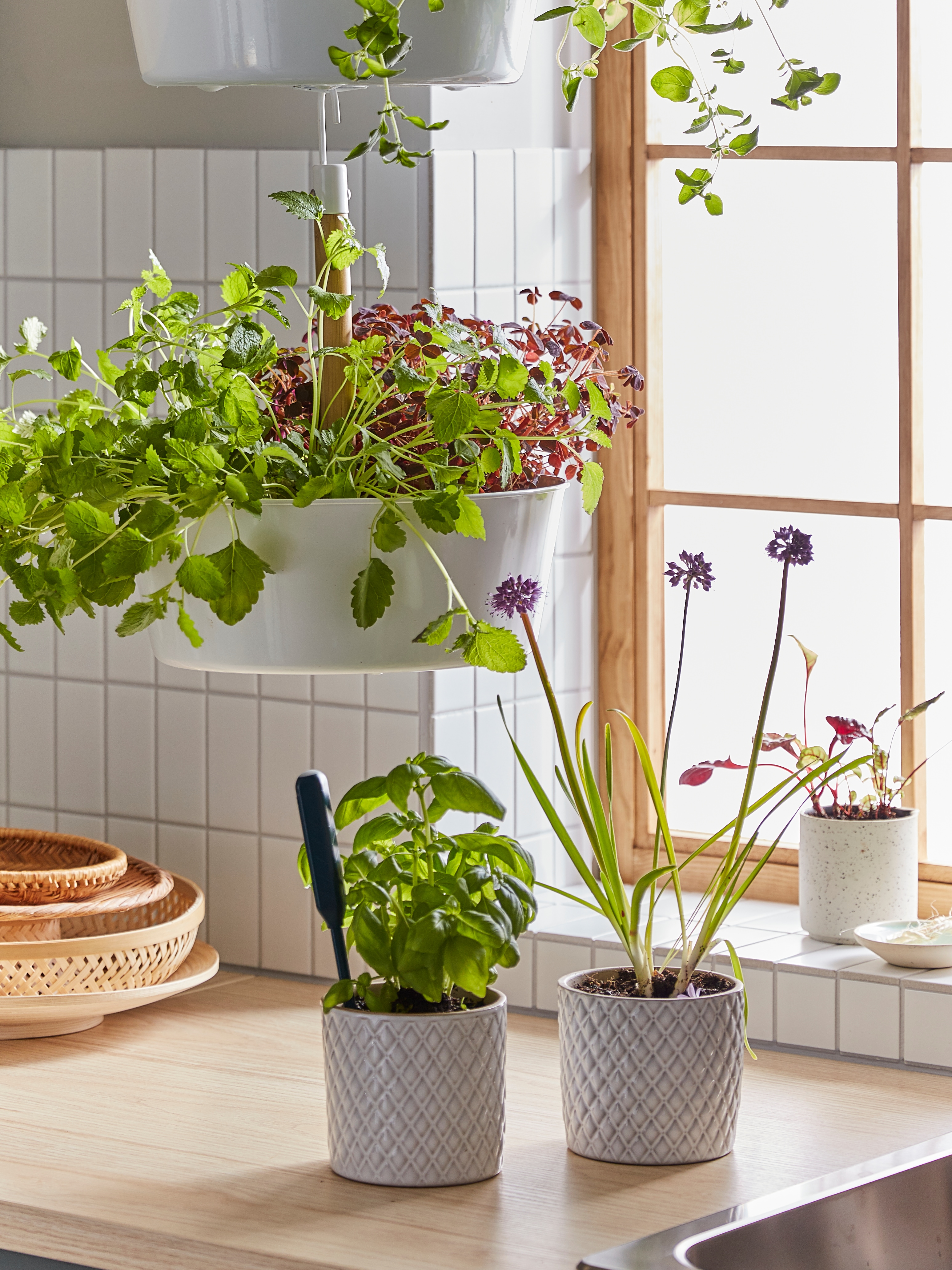 Kitchen with white tiles, hanging planters with plants hung on the ceiling, two plant pots with herbs and plants, on counter top.