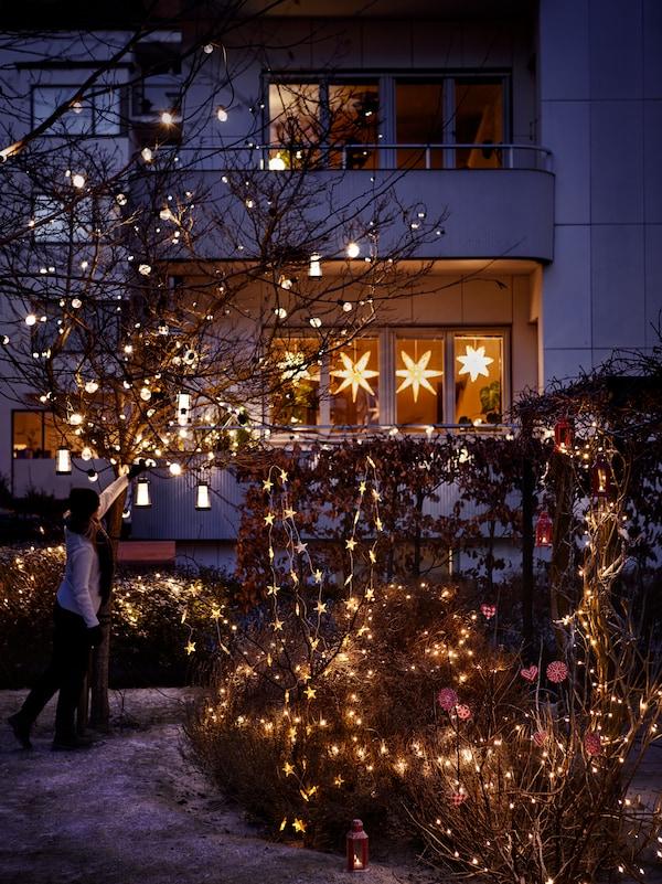 Belysning i ett träd och en buske utomhus och i bakgrunden syns julstjärnor i ett fönster.