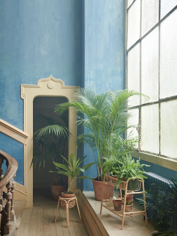 Des supports pour plantes en rotin et de nombreuses plantes devant une grande fenêtre.