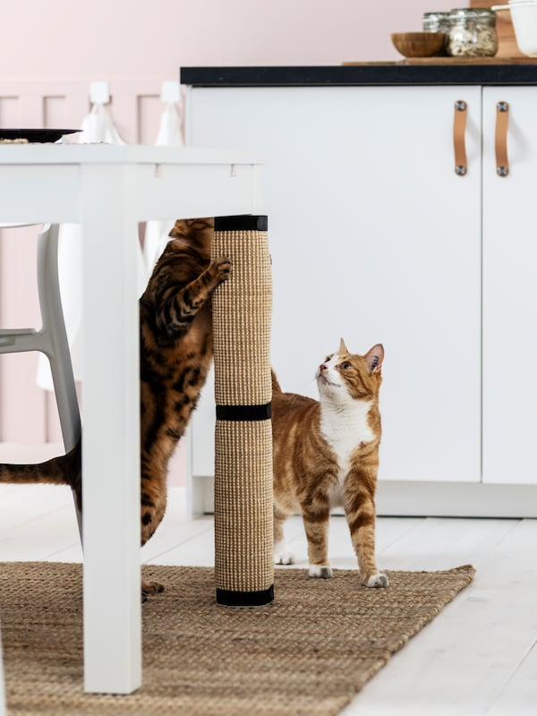 Due gatti marroni, neri e bianchi accanto a un tavolo da pranzo, uno dei due si fa le unghie su un tappeto tiragraffi LURVIG - IKEA