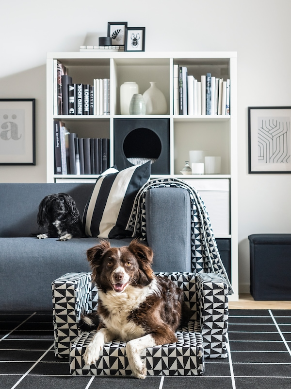 Un cane bianco e marrone sdraiato in una cuccia per cani LURVIG con motivo bianco e nero, un cane più piccolo è seduto su un divano grigio - IKEA