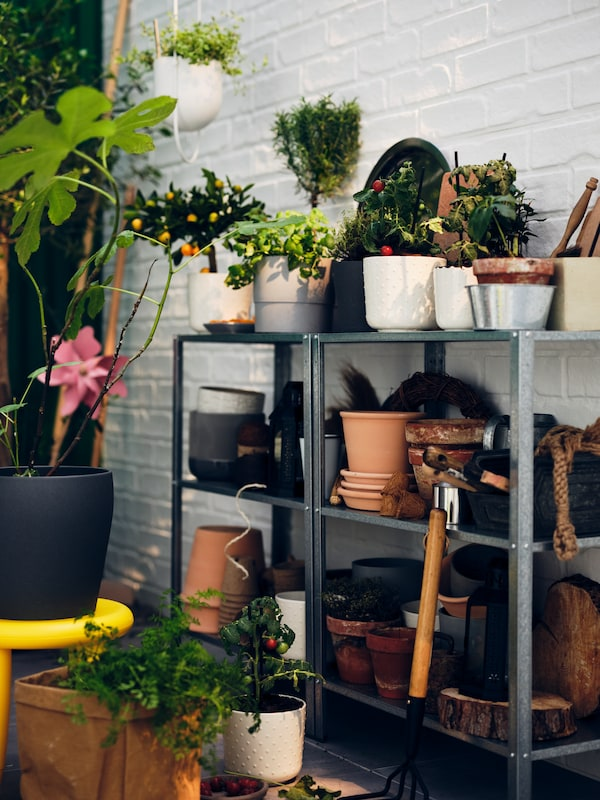 By a white brick wall stand side-by-side HYLLIS shelving units filled with plant pots, plants and planting accessories.