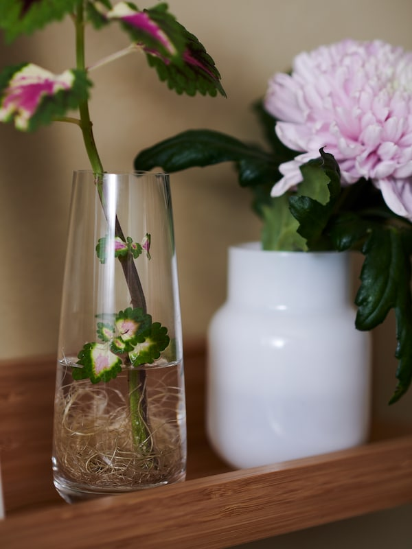 A MÅLERÅS picture ledge holds one flower set in a BERÄKNA clear-glass vase, and another in a white DRÖMSK plant pot.
