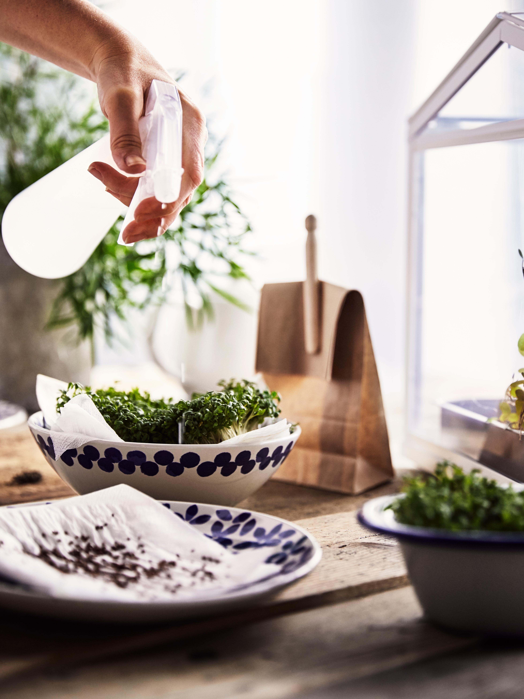 Plavo-beli MEDLEM tanjiri i činije sa semenom nalaze se na drvenom stolu s biljkama iz kućnog uzgoja koje se prskaju vodom.