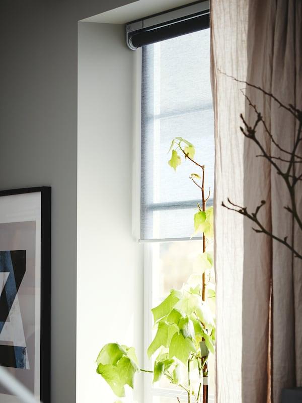 Ein Fenster mit einer Fensterbehandlung bestehend aus einem grauen KADRILJ Rollo mit Funk-/Batteriebetrieb und HANNALILL-Gardinen.