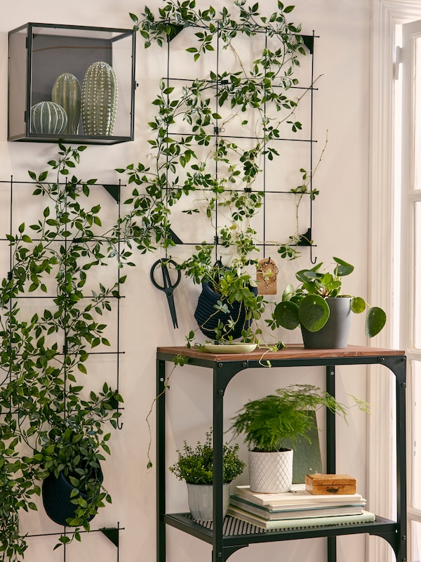 A living wall with trailing greenery and several cacti, and more plants on a small metal and wood shelf unit.