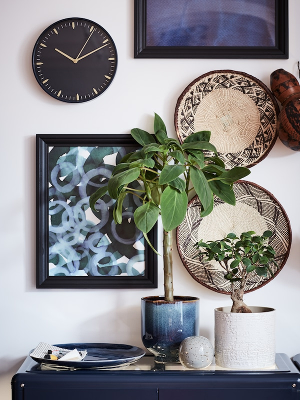 Two pot plants and a blue dish on top of a blue surface with a wall of art behind it.