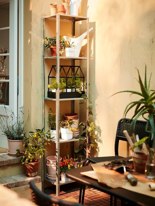 Une étagère métallique haute avec des plantes et des fines herbes en pot, un arrosoir blanc, une serre décorative noire et des pots.