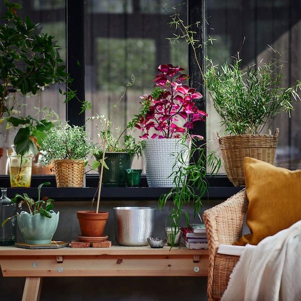 FRIDFULL plant pot, water hyacinth and VIGDIS cushion cover.