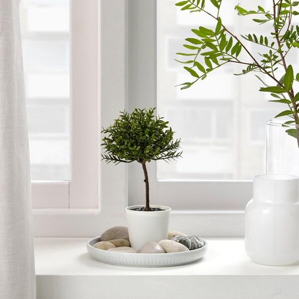 FEJKA Tekokasvi+ruukku, sisä-/ulkokäyttöön Myrtus, 6 cm