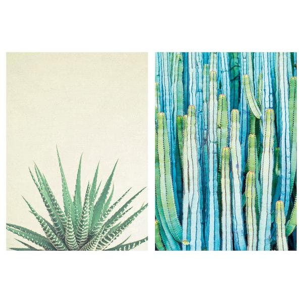 BILD Image, Végétaux épineux, 50x70 cm