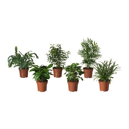 bladverk plante en pot ikea. Black Bedroom Furniture Sets. Home Design Ideas
