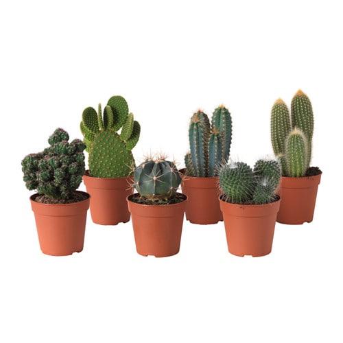 Cactaceae plante en pot ikea for Plante salle de bain