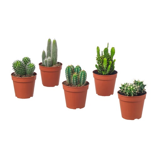 cactaceae plante en pot ikea. Black Bedroom Furniture Sets. Home Design Ideas