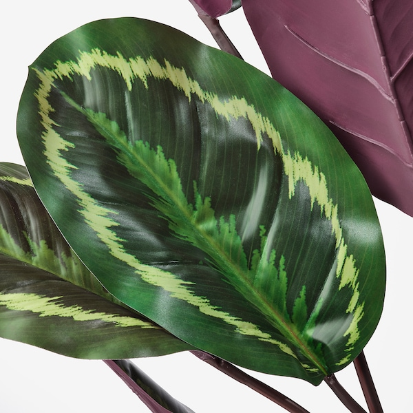 FEJKA plante artificielle en pot intérieur/extérieur Calathéa 19 cm 89 cm