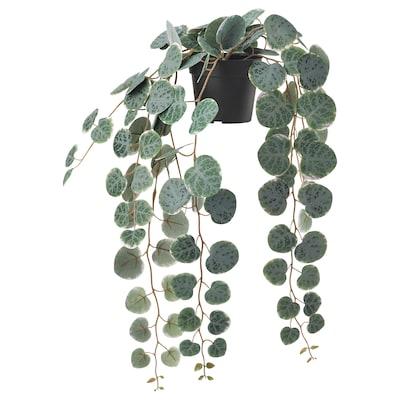 FEJKA Plante artificielle en pot, intérieur/extérieur à accrocher/CEROPEGIA WOODII, 9 cm