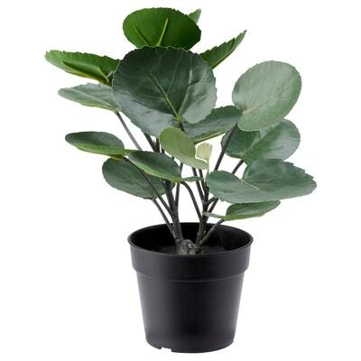 FEJKA Plante artificielle en pot, intérieur/extérieur Aralia, 9 cm