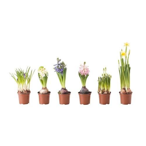 L karyd plante en pot ikea for Plante exterieur ikea