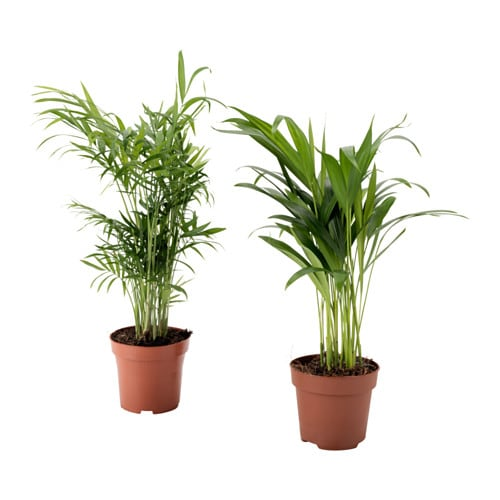 palmmix plante en pot ikea. Black Bedroom Furniture Sets. Home Design Ideas