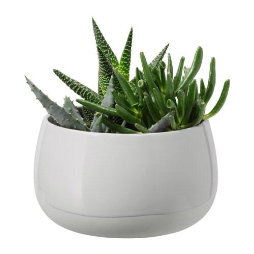 Succulent Plante Avec Vase Ikea