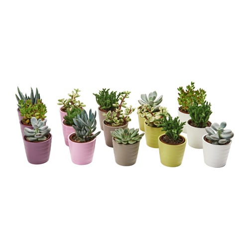 Succulent plante avec vase ikea for Pot de decoration interieur