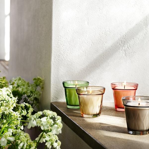VÄLDOFT Bougie parfumée dans verre, rhubarbe fleur de sureau/beige, 8 cm
