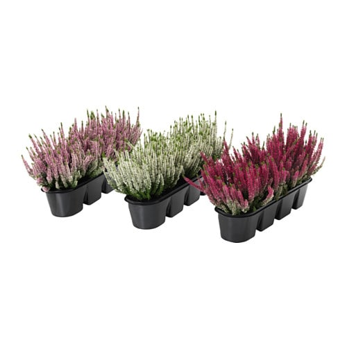 V xtlig plantes en pot pour jardini re ikea for Plantes decoratives exterieur