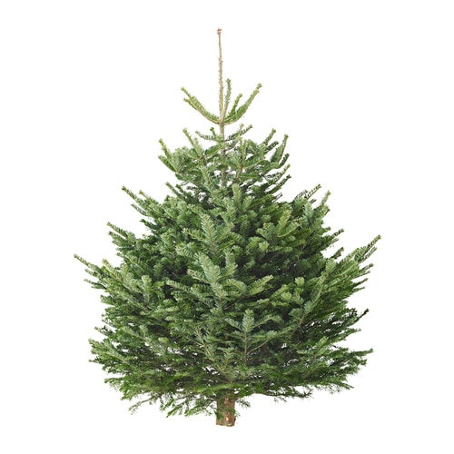 http://www.ikea.com/gb/en/images/products/abies-nordmanniana-christmas-tree__0149809_pe307953_s4.jpg
