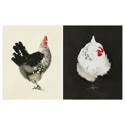 BILD poster Chicken 40 cm 50 cm 2 pack