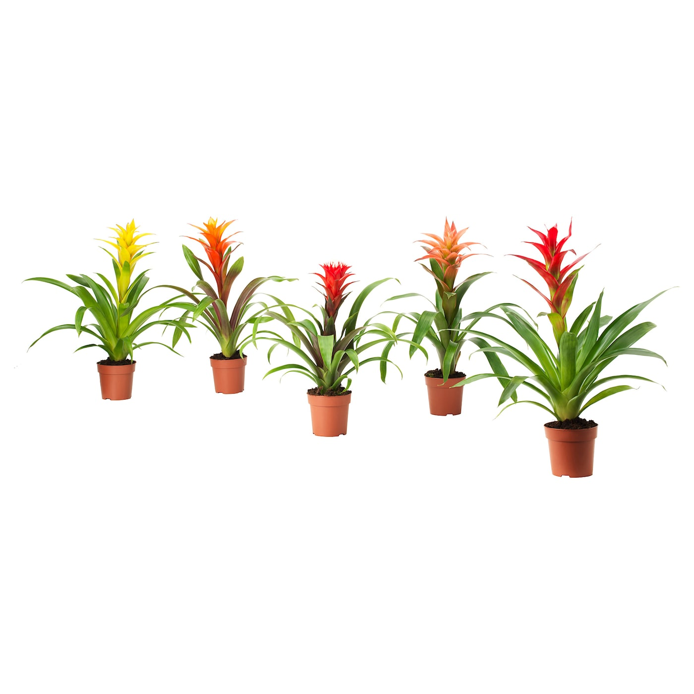 IKEA BROMELIACEAE potted plant