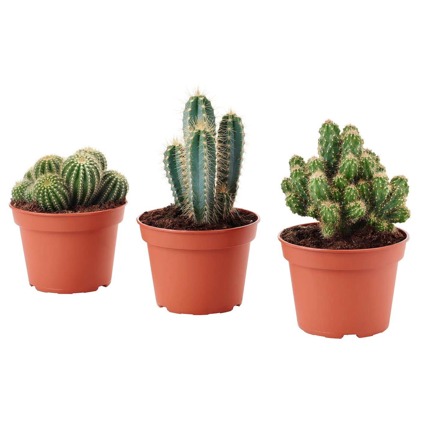 plants cacti house plants potted plants ikea. Black Bedroom Furniture Sets. Home Design Ideas