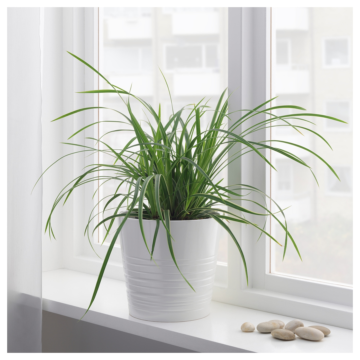 IKEA CAREX potted plant Decorate your home with plants combined with a plant pot to suit your style.