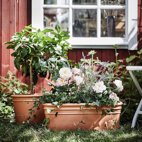 CURRYBLAD Flower box, outdoor terracotta, 55x24 cm