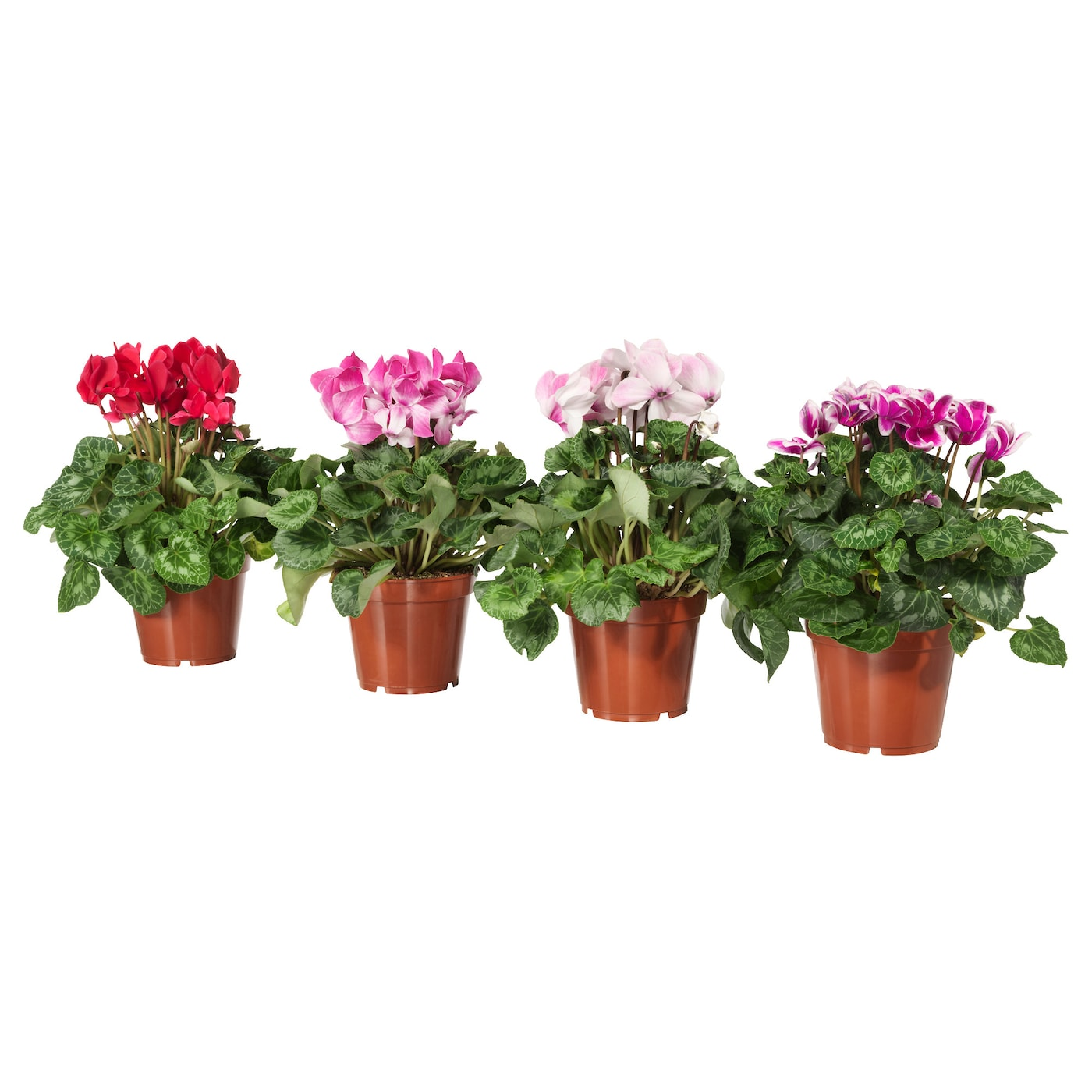 IKEA CYCLAMEN potted plant