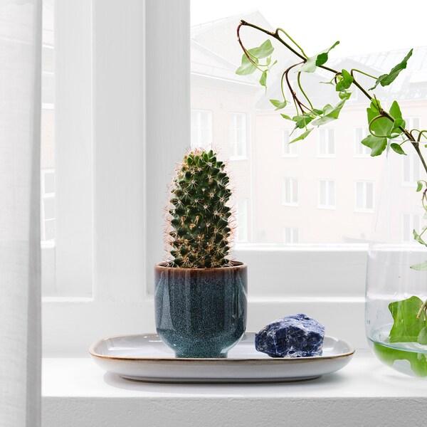 DRÖMSK Plant pot, in/outdoor dark blue, 6 cm