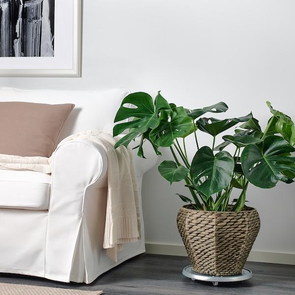 DRUVFLÄDER Plant pot, water hyacinth/grey, 24 cm