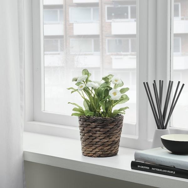 DRUVFLÄDER plant pot water hyacinth/grey 12 cm 15 cm 12 cm 13 cm